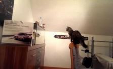 Mačka napada ribe u akvarijumu